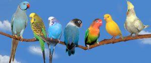 - попугаи