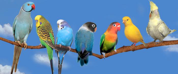 neopoznannoe - Есть ли имена у попугаев?